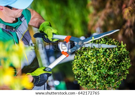 Gardener Trimming Plants. Topiary Work. Passion For Plants Concept Photo. #642172765