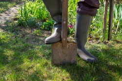 Gardener wearing gumboots standing with a foot on a garden spade in a lush green garden in spring conceptual of the seasons