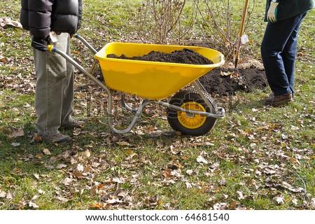 Gardener wheeling wheelbarrow full of soil