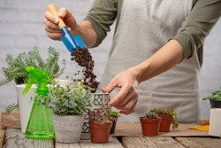 Gardener woman hand pours some earth into pot before transplant indoor flower on rustic wooden table on white background. Concept of plants care and home garden. Frozen motion.