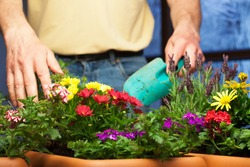 Gardener working with flowers in plant pots in a greenhouse - focus on the flowers in the foreground