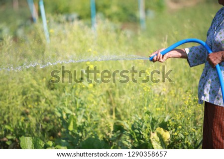 Gardeners are watering in a vegetable garden in an organic farm. #1290358657