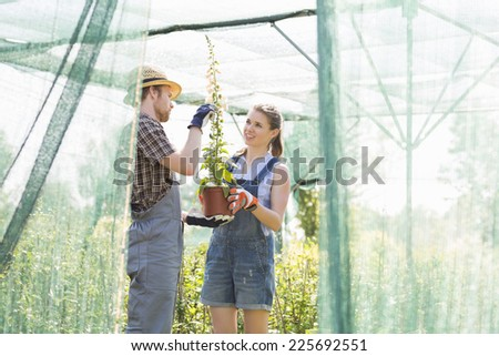 Gardeners discussing over potted plant at greenhouse #225692551