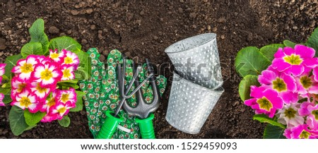 Gardeners hands planting flowers at back yard Gardening Tools on Soil Background. Spring Garden Works Concept