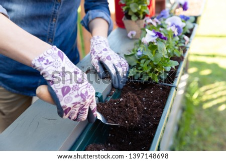 Gardeners hands planting flowers in pot with dirt or soil in container on terrace balcony garden. Gardening concept