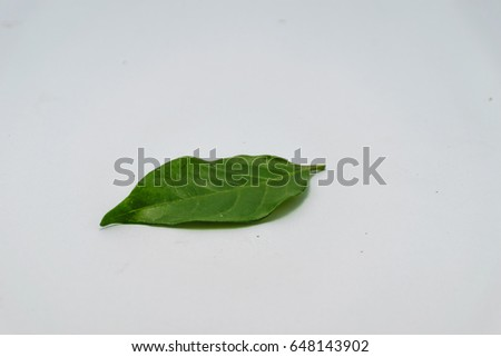 Gardenia leaf is isolated image, white background #648143902
