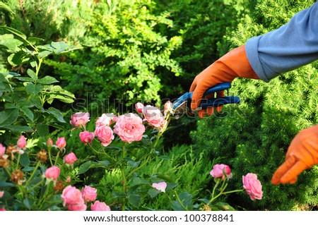 gardening #100378841