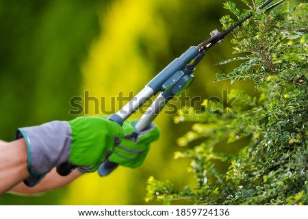 Gardening and Landscaping Industry Theme. Professional Gardener Trimming Decorative Garden Tree Branches Close Up Photo.