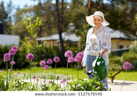 gardening and people concept - happy senior woman watering allium flowers at summer garden