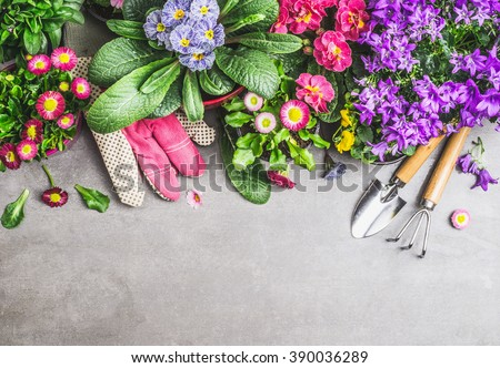 Gardening border with garden tools, gloves ,dirt and various flowers pots on gray stone concrete background, top view, border