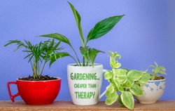 Gardening… Cheaper than therapy text on mug used as a plant pot for houseplant, eco therapy for good mental health.