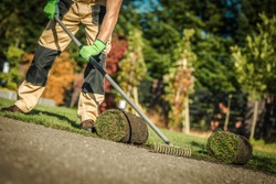 Gardening Company Worker Installing Fresh Natural Grass Turfs From Roll In Residential Garden. Landscaping Theme.