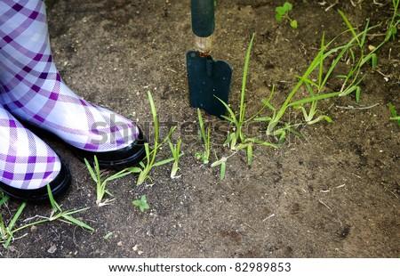 Gardening concept - stock photo