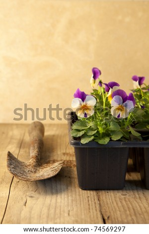Gardening concept with seedlings and hand trowel on an old wooden table.