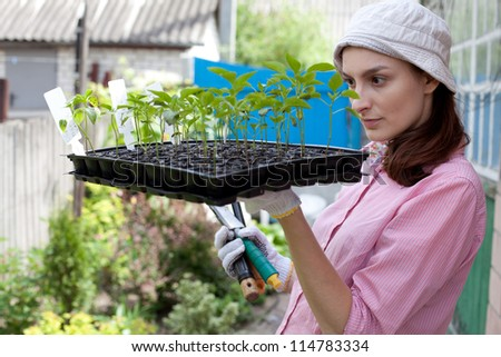 Gardening concept - woman with seedlings in the garden