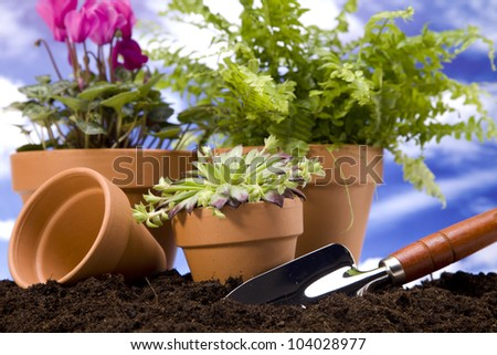 Gardening concept! work tools, plants and other
