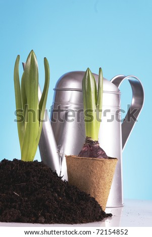 Gardening Concept! Young seedling in springtime! - stock photo