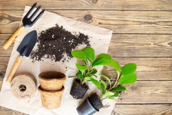 Gardening equipment with plants and soil pile, wooden table Hobbies and leisure, home gardening, Cultivation and caring for indoor potted plants. Replanting the plant into the pot.
