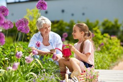 gardening, family and people concept - happy grandmother and granddaughter planting flowers at summer garden