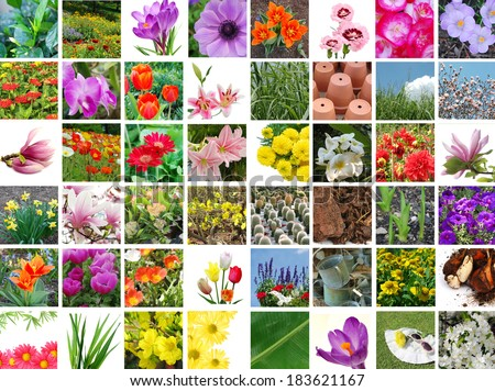 Gardening flowers collection