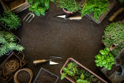 Gardening frame, tools and plants on soil background