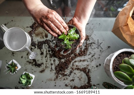 gardening home. Girl replanting green pasture in home garden.indoor garden,room with plants banner Potted green plants at home, home jungle,Garden room gardening, Plant room, Floral decor.