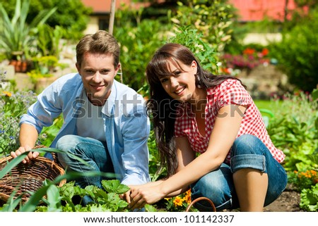 Gardening in summer - happy couple harvesting and having lots of fun