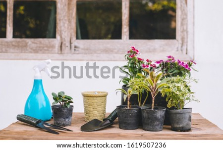 Gardening in the house, Gardening equipment and flowers and trees.