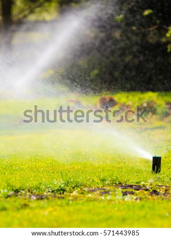 Gardening. Lawn sprinkler spraying water over green grass. Irrigation system - technique of watering in the garden. #571443985