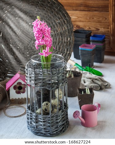 Gardening on the window. Pink hyacinth and seedlings in peat pots on a background of pots for seedlings and gloves