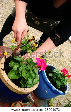 gardening or planting flowers in pot with dirt or soil. hands with trowel plant spring bloom
