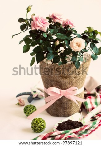 Gardening - pink rose in a pot with garden's tools