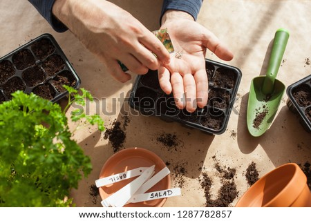 gardening, planting at home. man sowing seeds in germination box #1287782857