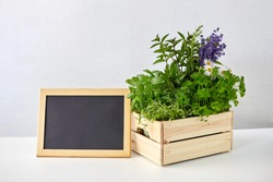 gardening, plants and organic concept - green herbs and flowers in wooden box with chalkboard on table