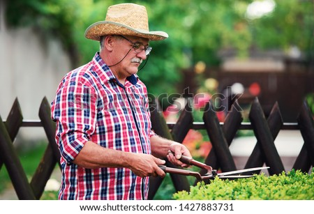 Gardening. Senior man working in the garden, trimming hedge with pruning tools. Hobbies and leisure