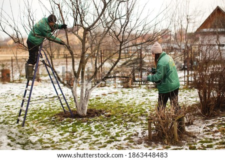 gardening team, cute caucasian female gardeners pruning apple tree branches with hedge trimmer and pruning shears, concept winter spring tree pruning and winter garden care Stockfoto ©
