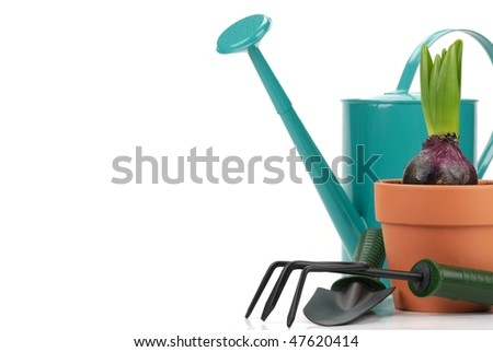 Gardening tools and young hyacinth on the white.