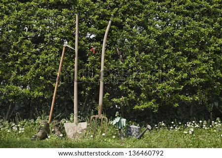 gardening tools leaning on hedge