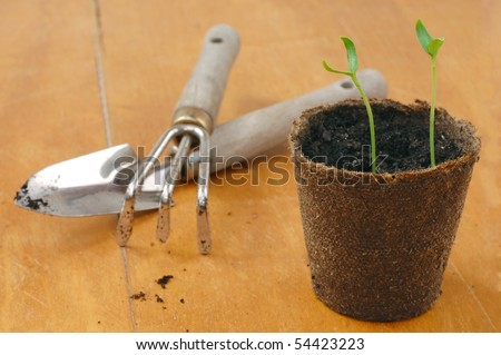 Gardening Tools with Seedlings in a Peat Pot on a Table
