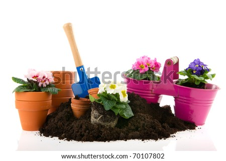 Gardening with sand shovel Primroses and flower pots