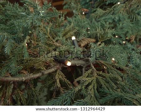 Garland of fir branches #1312964429