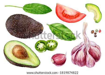 Garlic avocado tomato basil sage jalapeno peppercorns set watercolor painting isolated on white background