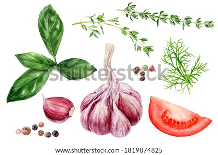 Garlic basil tomato thyme dill peppercorns set watercolor painting isolated on white background