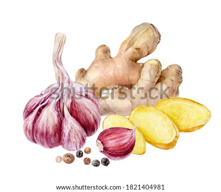 Garlic ginger peppercorns composition watercolor painting isolated on white background