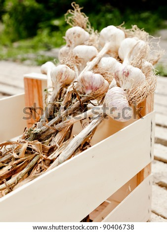 Garlic in a wooden crate/ A wooden crate full of fresh garlic cloves