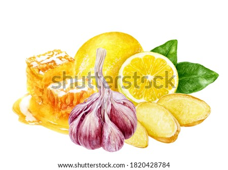 Garlic lemon honey ginger composition watercolor painting isolated on white background