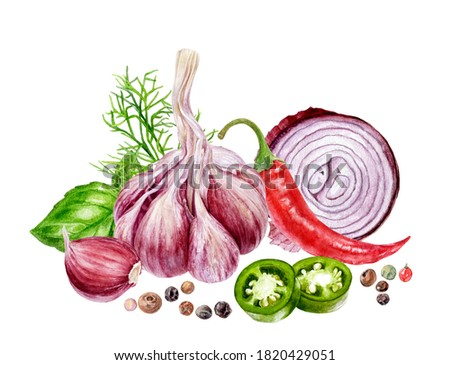 Garlic onion black pepper jalapeno basil dill composition watercolor painting isolated on white background