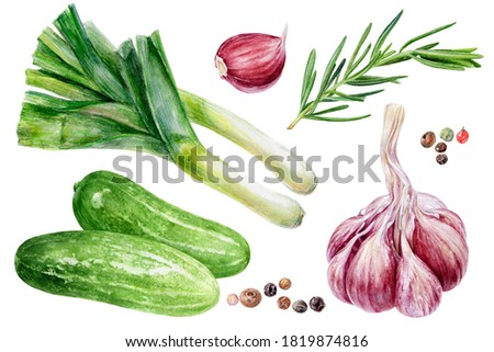 Garlic rosemary cucumbers leek peppercorns set watercolor painting isolated on white background