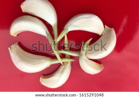 Garlic sprouts image, garlic sprouts are most healthy and nutritious food