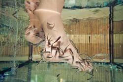 Garra rufa - doctor fish for spa